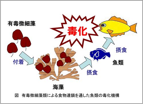 フグ 毒 症状